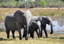 gracious Elephants